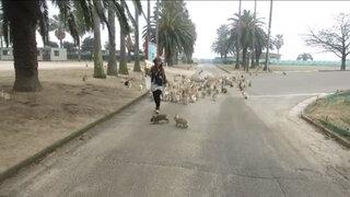 VIDEO: turista es perseguida por una estampida de conejos en Japón