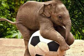Conoce los animales más inteligentes del planeta, según científicos