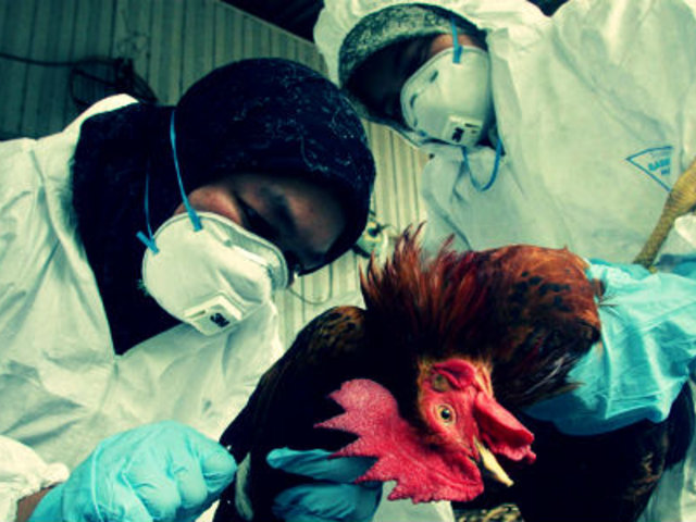 China detecta primer caso mundial de gripe aviar H10N3 en humanos