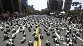 VIDEO: Pandas gigantes en peligro de extinción invaden calle de Taiwan