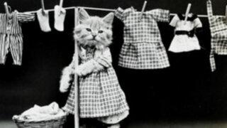 Adorables fotos: primer álbum de gatos con ropa cumple 100 años