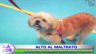 Municipalidad de Surquillo inició campaña de adopción de animales