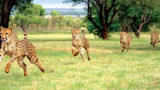 Por tierra, agua o aire: Los animales más veloces del planeta