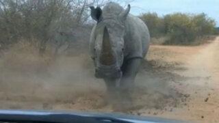 Joven sufre ataque de rinoceronte mientras conduce su vehículo
