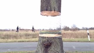Increíble ilusión óptica hace que un árbol 'flote' en el aire