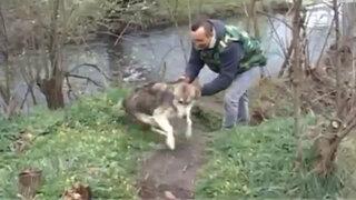 VIDEO: un perro agradece y salta de alegría luego de ser salvado de la muerte