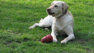 Rímac: desconocidos envenenaron a más de una decena de perros domésticos