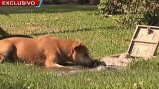 BDP inicia búsqueda de responsables de envenenamiento de perros