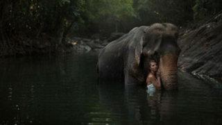FOTOS: rusa captura increíbles imágenes de modelos con animales salvajes