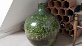 Mini jardín: anciano cultiva plantas dentro una botella que no abre desde 1972
