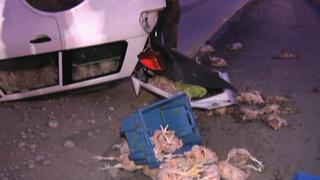 Auto que transportaba pollos se volcó en la Vía Expresa dejando dos heridos