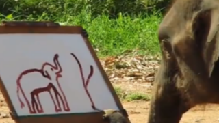 VIDEO: elefante se dibuja con una sonrisa y conmueve las redes sociales