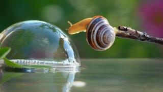 FOTOS: mira el espectacular registro del diminuto y bello mundo de los caracoles