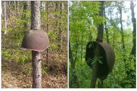 FOTOS: equipos militares de la Segunda Guerra Mundial atravesados por árboles