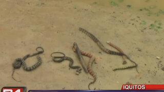 Serpientes venenosas invadieron un asentamiento humano de Iquitos