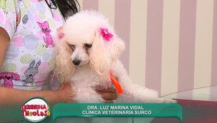 Entérese qué cuidados necesita su mascota antes y después del parto