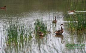 Acceso gratuito a todas las madres a Los Pantanos de Villa
