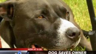 Estados Unidos: perro salvó a su dueño al marcar el 911