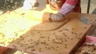 En este país puedes comerte un dulce aprobado por abejas... y relleno de ellas