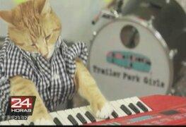 El video de un gato que 'toca' el piano es en el nuevo viral en Internet