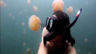 Fotógrafa sorprende al mundo tras nadar junto a miles de medusas