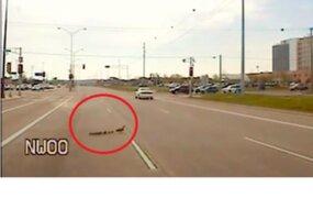 Estados Unidos: policía detiene el tránsito para que familia de patitos cruce autopista