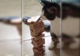 VIDEO: gato que juega Jenga sin derrumbar la torre causa furor en YouTube