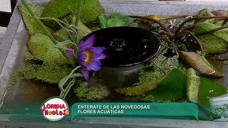 Sepa cómo hacer decoraciones con flores y plantas acuáticas