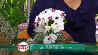Lorena y Nicolasa: sepa cómo hacer decorativos arreglos con orquídeas