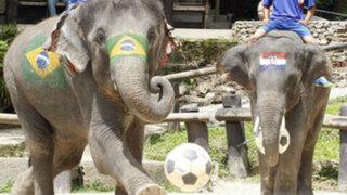Tailandia promueve la Copa Mundial de la FIFA 2014 con fútbol de elefantes