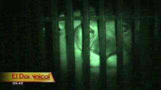 Zoológico de noche: sorprendentes comportamientos de los animales en la oscuridad