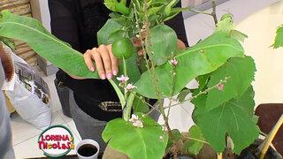 Lorena y Nicolasa: ¿cómo cultivar árboles frutales en casa?
