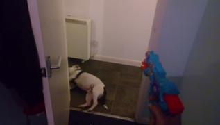 Perrito finge estar muerto luego que dueño le dispara con pistola de juguete