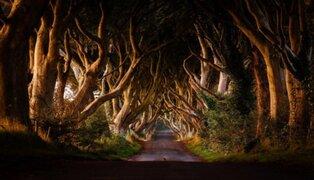 Irlanda: conoce el terrorífico camino de Dark Hedges que atemoriza a turistas