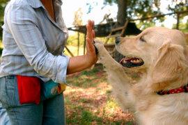 Lorena y Nicolasa: la importancia de la psicología para mascotas