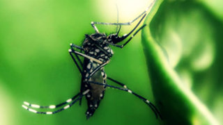 Virus letal aún no tiene cura y amenaza epidemia en regiones de América