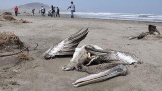 Encuentran 800 animales muertos en la costa norte del país
