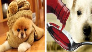Lorena y Nicolasa: sepa qué hacer cuando su mascota tiene tos