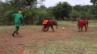 Pequeños elefantes juegan su propio Mundial del Fútbol en Kenia