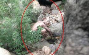 ¿El 'Gollum' de la vida real?: captan extraño ser en un bosque de China