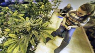 Estados Unidos: crearán mercado donde venderán legalmente marihuana
