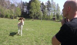 VIDEO: mira como este hombre puede 'hablar' con los caballos