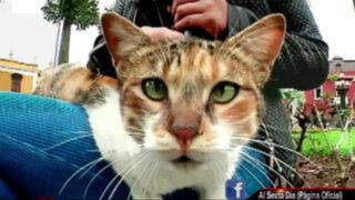 Invasión gatuna en el Parque Universitario: imperio felino se extiende en Lima