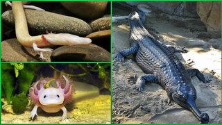 Mundo: conoce los animales que podrían extinguirse en muy poco tiempo
