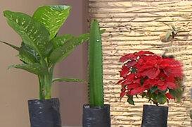 Lorena y Nicolasa: conozca todo sobre las plantas venenosas domésticas