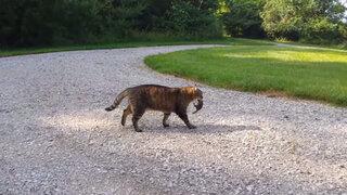 VIDEO: mira cómo una ardilla se enfrenta al gato que intentó comérsela