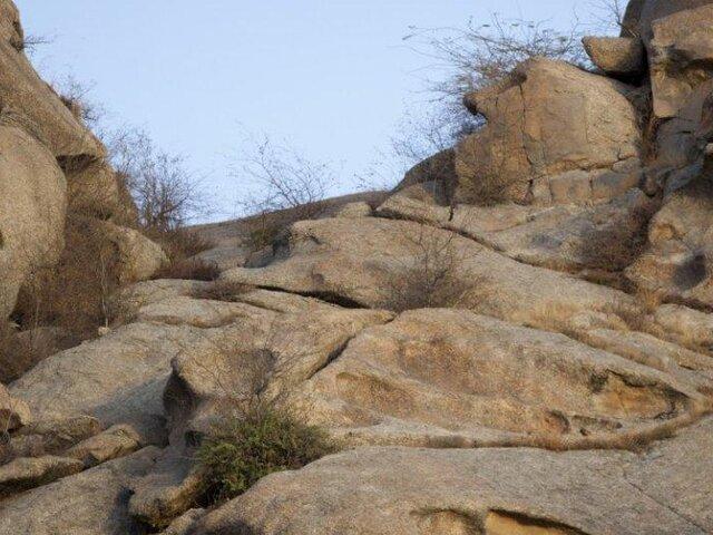 FOTOS: de esta forma se camuflan los leopardos antes de atacar a su presa