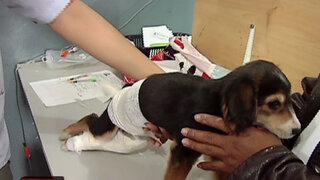 'Veterinaria de los pobres' inició campaña para salvar a mascotas