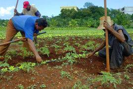 Advierten que Fenómeno del Niño está causando estragos en la agricultura