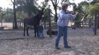 Todo un artista: peculiar burro canta al escuchar el sonido de un violín